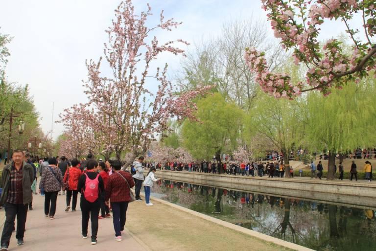 海棠盛开北土城,满园全是赏花人21.jpg