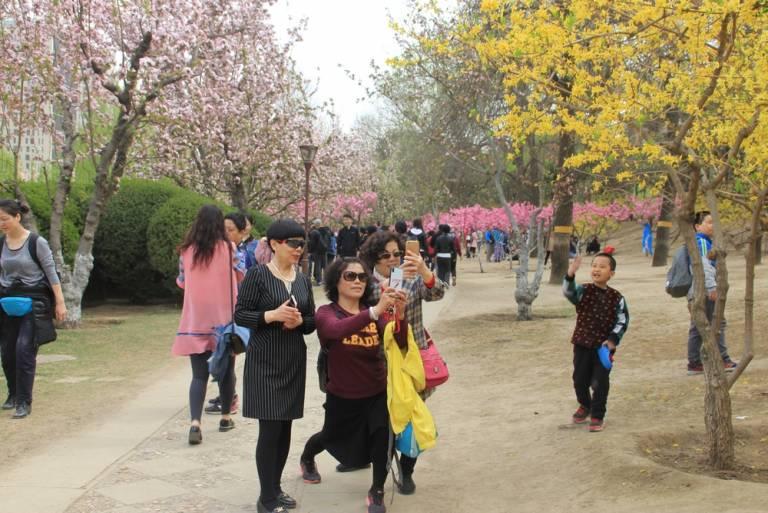 海棠盛开北土城,满园全是赏花人22.jpg