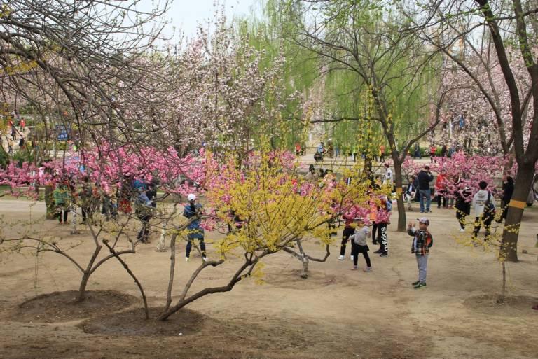 海棠盛开北土城,满园全是赏花人25.jpg