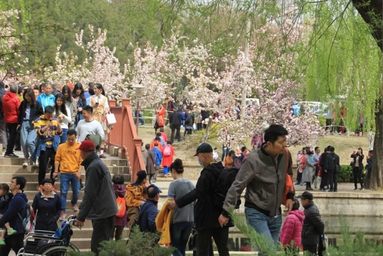 海棠盛开北土城,满园全是赏花人26.jpg
