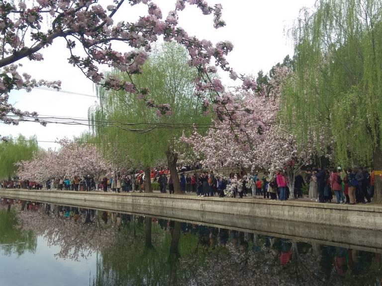 海棠盛开北土城,满园全是赏花人29.jpg