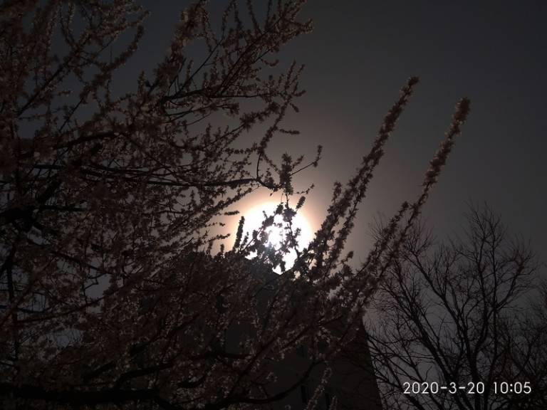 手机逆光拍摄:花儿朵朵向阳开2.jpg