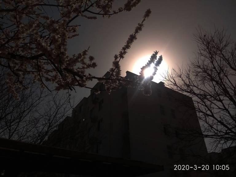 手机逆光拍摄:花儿朵朵向阳开3.jpg