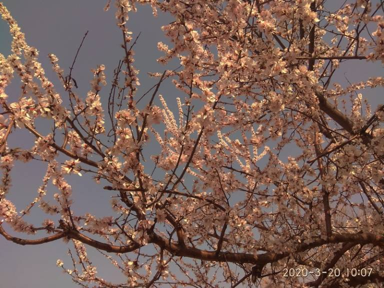 手机逆光拍摄:花儿朵朵向阳开5.jpg
